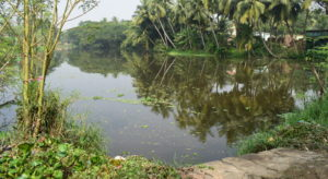 Pond-near-Gangeswari-Temple-at-Bayalish-Baati-village-Prachi-Valley