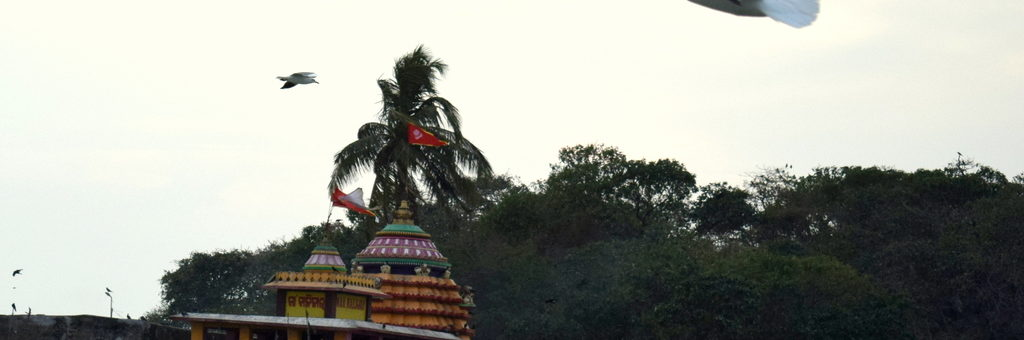 A-Sea-Gull-Flying-across-the-Kalijai-Temple